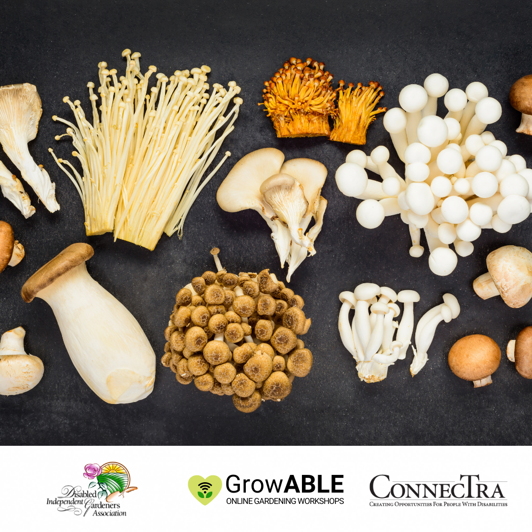 A large variety of mushrooms on a black background. (Disabled Independent Gardeners Association logo. GrowAble logo. ConnecTra logo.).